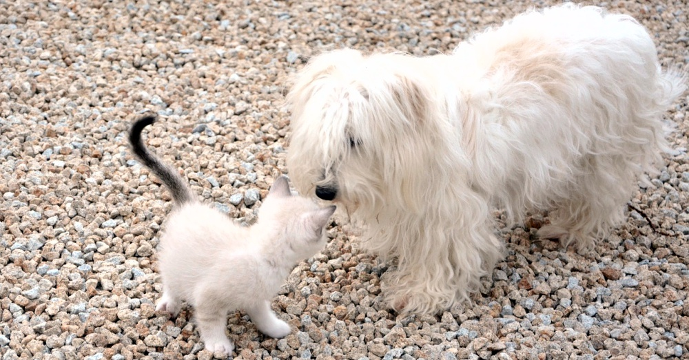 Cat and Dog_2