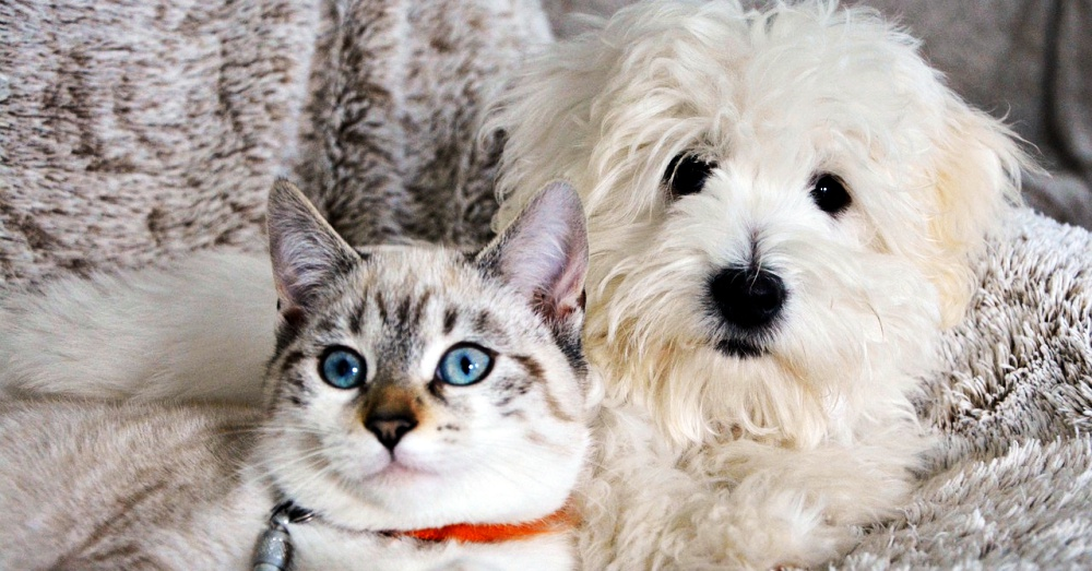 Cat and Dog_4