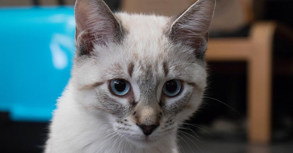 Cat5_1000x523