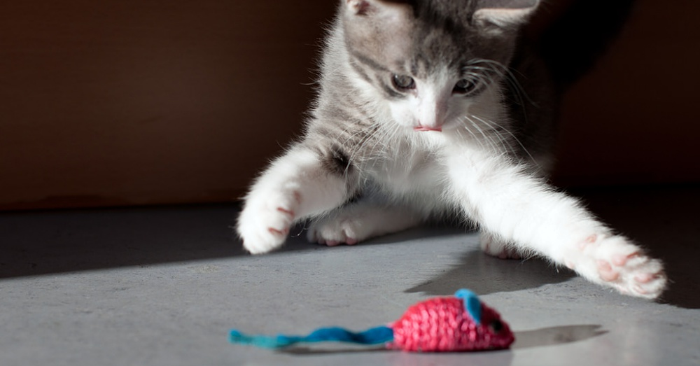 CatToy1_1000x523