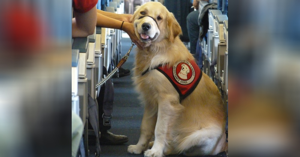 Image of: Therapy Photoflickrcan Do Canines Kremcom Breaking Delta Adds Stricter Rules For Emotional Support Animals