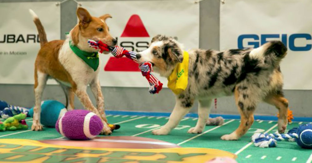 Source: YouTube/Wochit Entertainment A scene from last year's Puppy Bowl.