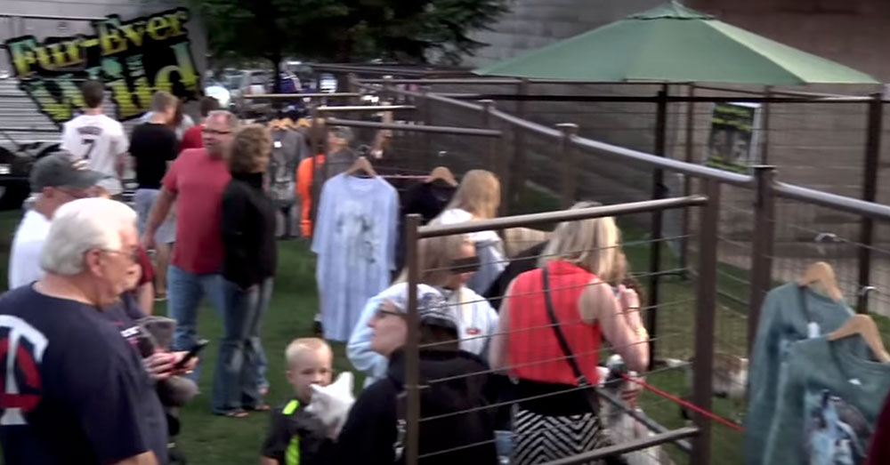 Source: YouTube/Elko Speedway People at a Minnesota raeway observe Gray wolves in a Fur-Ever Wild exhibit.