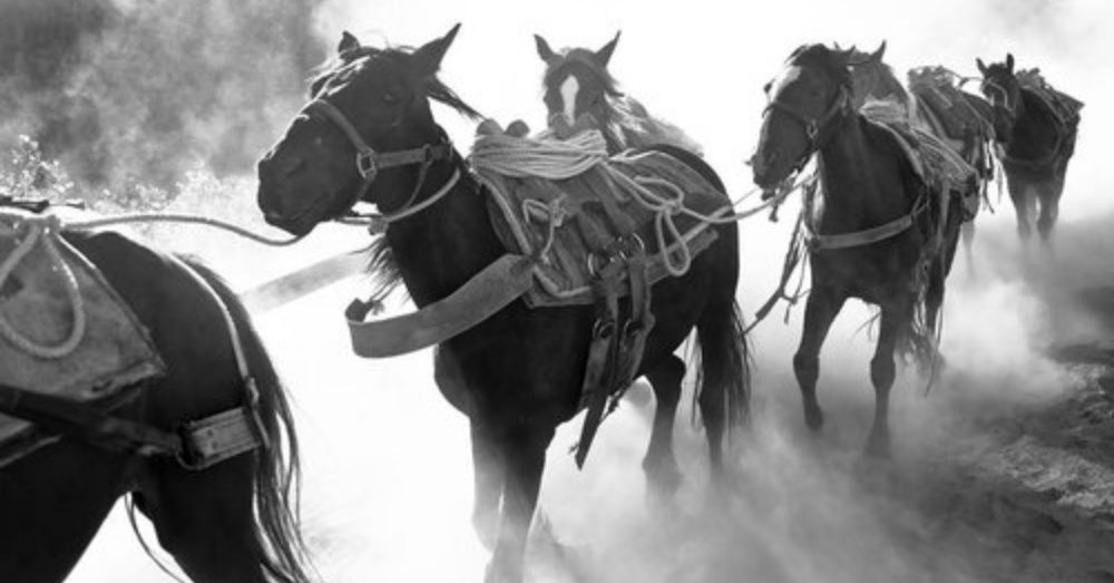 Photo:Facebook/SAVE Havasupai Horses