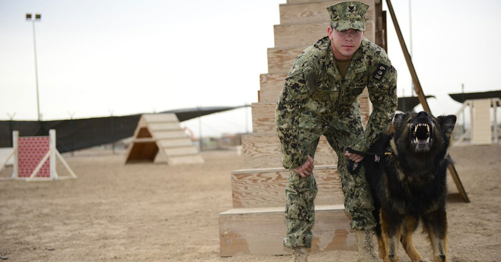 Source: U.S. Air Force U.S. Navy Master at Arms 2nd Class Matthew Young, Camp Lemonnier Security Forces military working dog handler, and Baxter are among the military working dog teams who secure Camp Lemonnier, Djibouti.