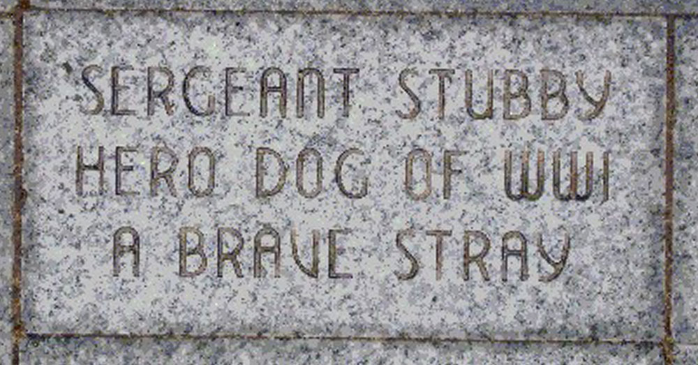 Source: Wikimedia Commons Sgt. Stubby was laid to rest a true hero.