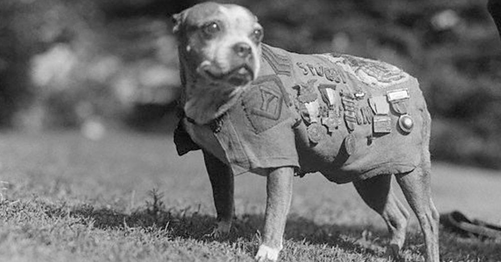 Source: Wikimedia Commons Sgt. Stubby.