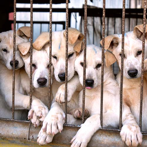 Protect Dogs And Cats In South Korea