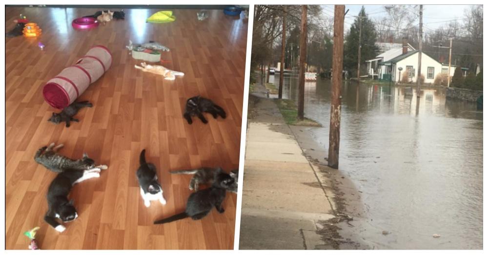 Photos: Facebook/ Cozy Corner Kitten Rescue