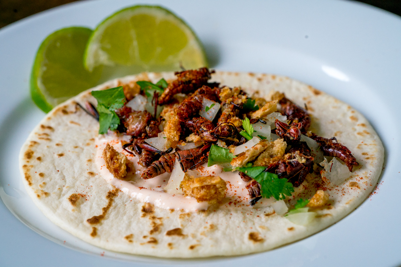 Crispy Cricket Tacos 7