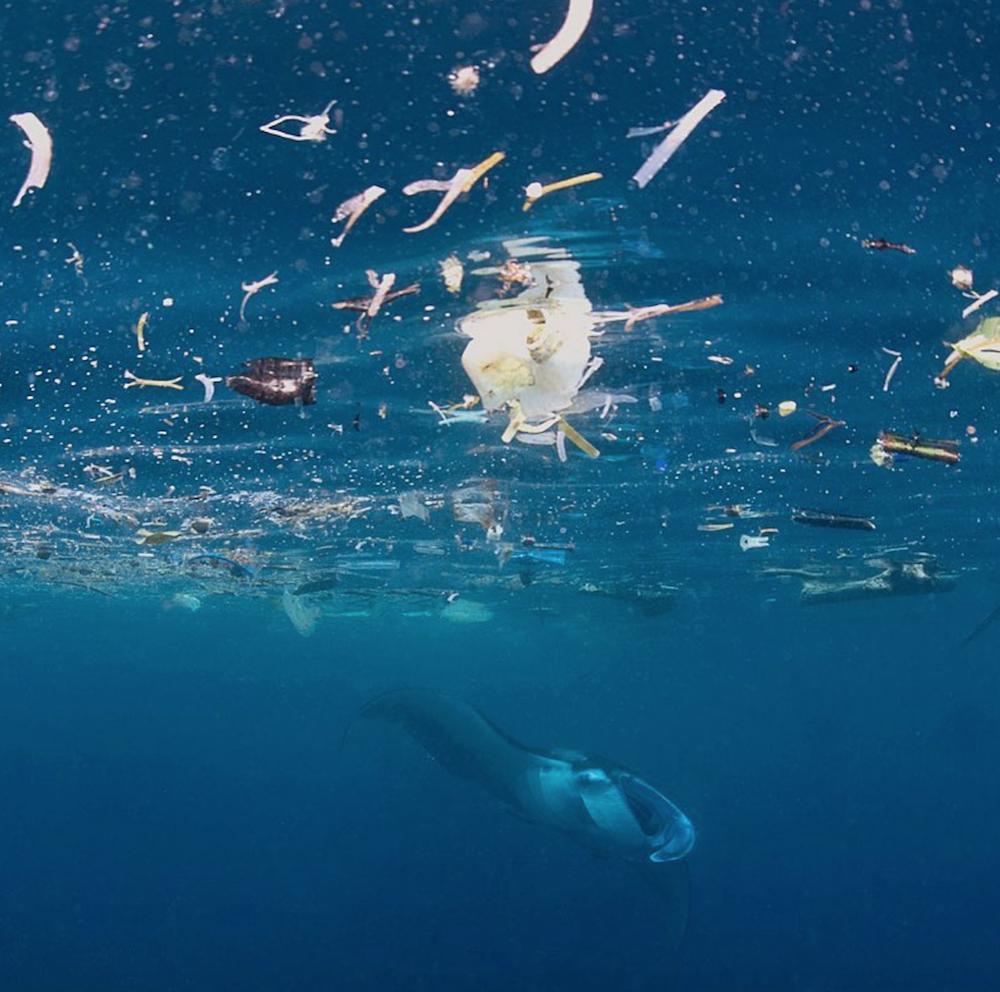 Instagram/Everyday Extinction