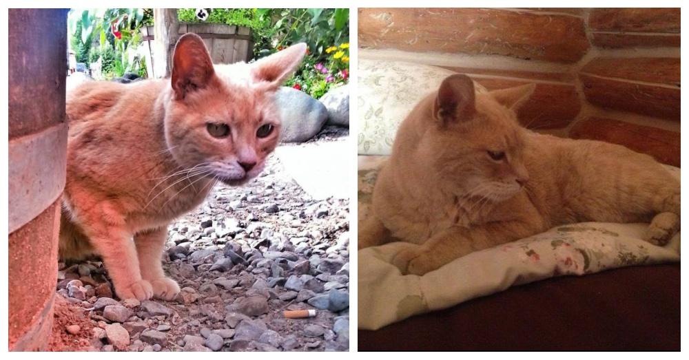 Photo: Facebook/Stubbs Mayor Cat