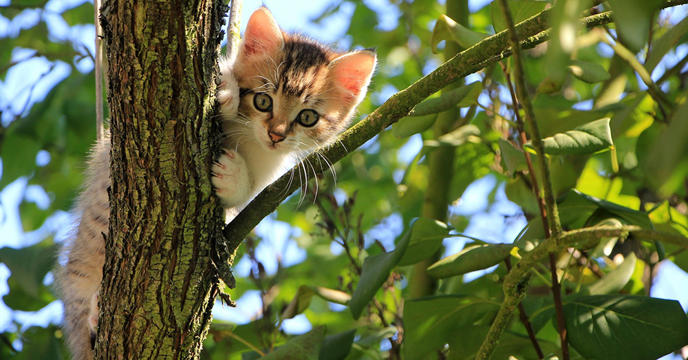Source: Pexels Conservationists say feral cat esitimates gloss over the problem they pose to the enviroment.