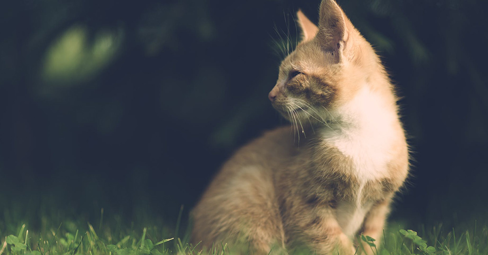 Source: Pexels Feral cats contribute to the deaths of billions of mammals each year.