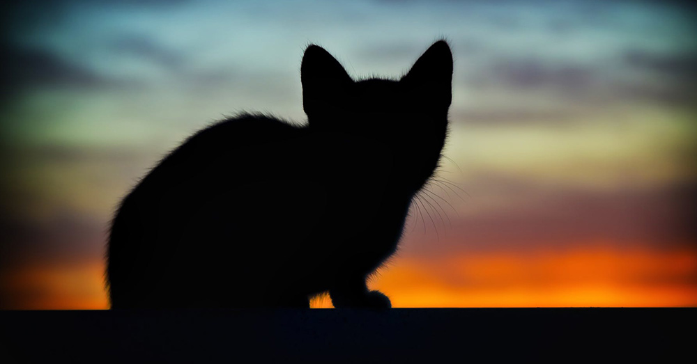 Source: Pexels The humane approach to feral cat populations has long been the trap neuter release (TNR) method.