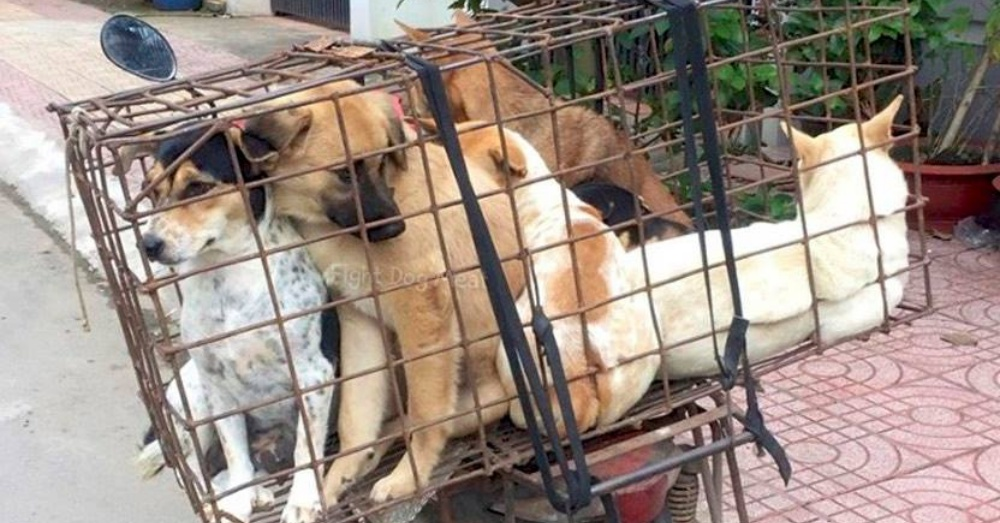Photo:Facebook/Fight Dog Meat