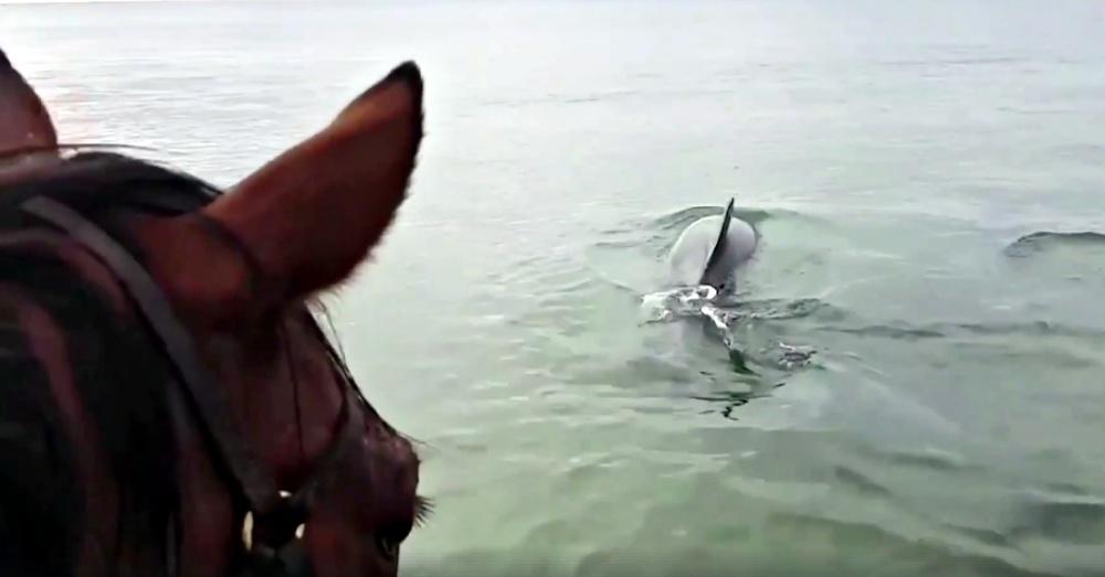 Screen Shot: Facebook/Animalkind Stories