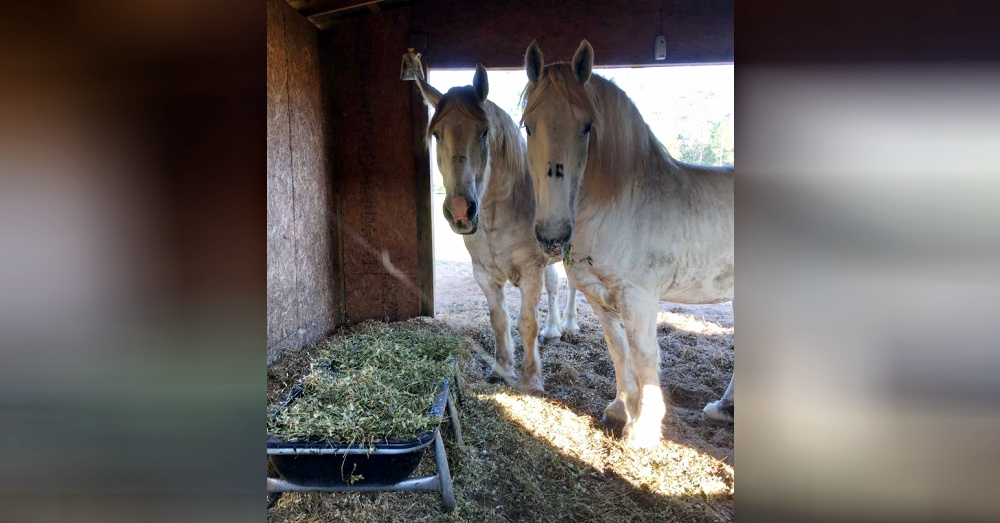 Photo: Facebook/Luke & Ike: Journey From Horse Abuse To Heaven On Earth