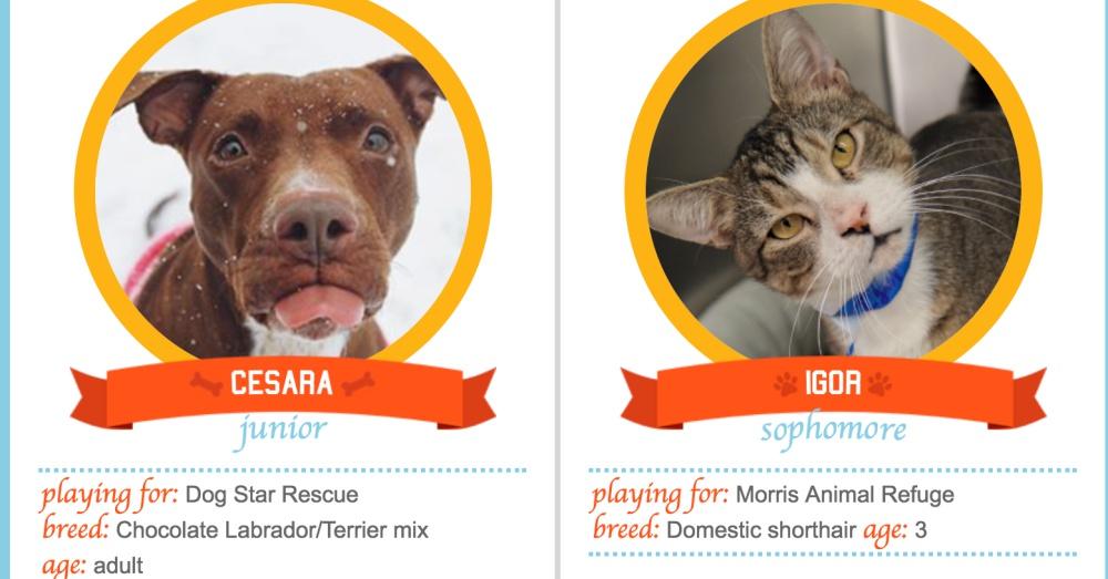 Photo: Petplan Pet Insurance