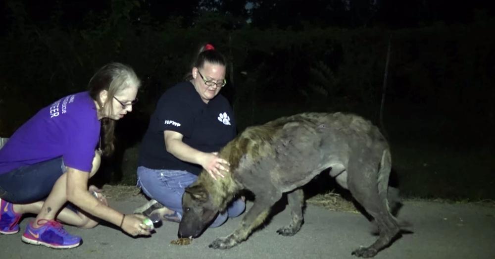 Photo: YouTube/World Animal Awareness Society