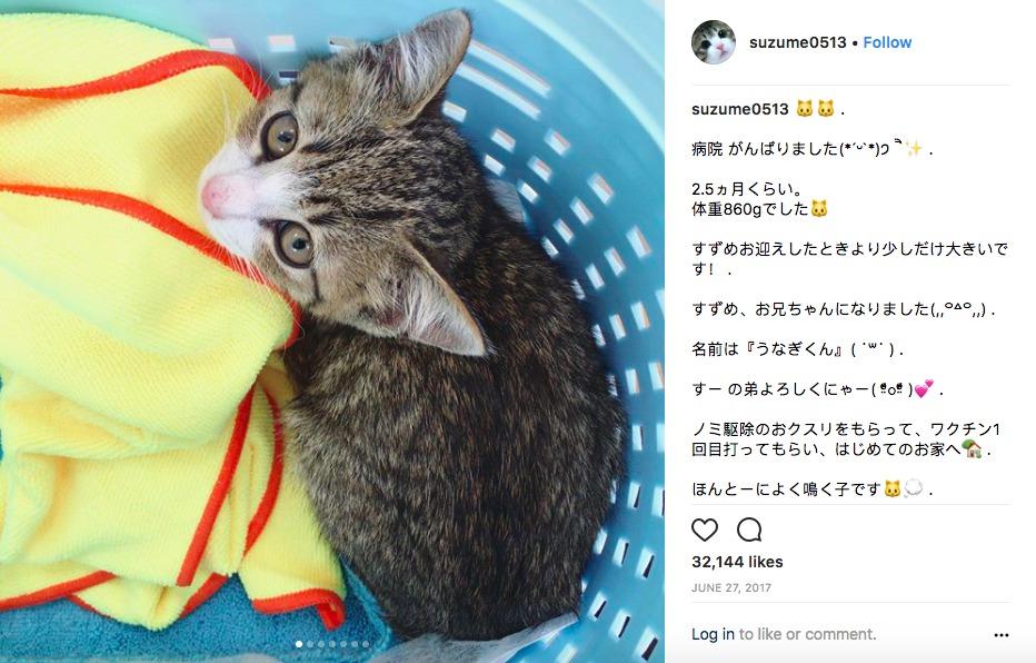 Photo: Instagram/suzume0513