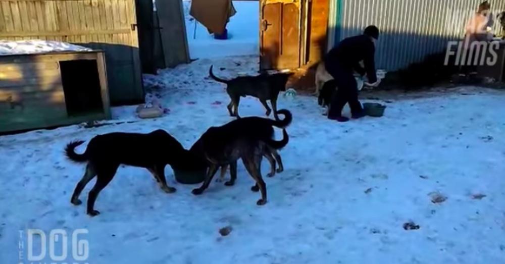 Screen Shot: YouTube/World Animal Awareness Society