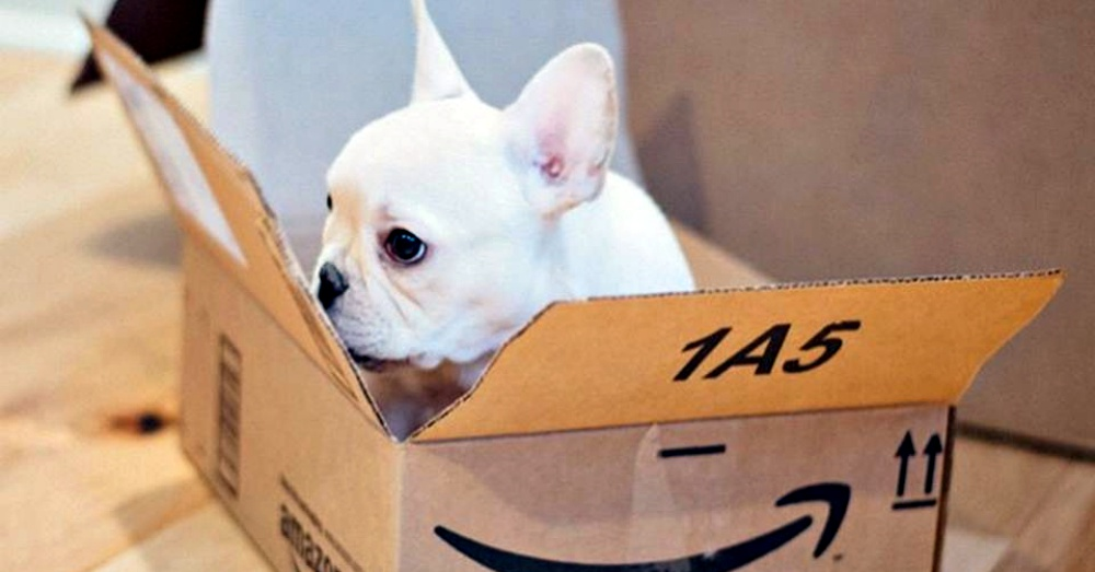 Photo: Facebook/Dogs of Amazon