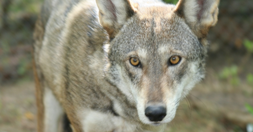 Photo: Flickr/Red Wolf