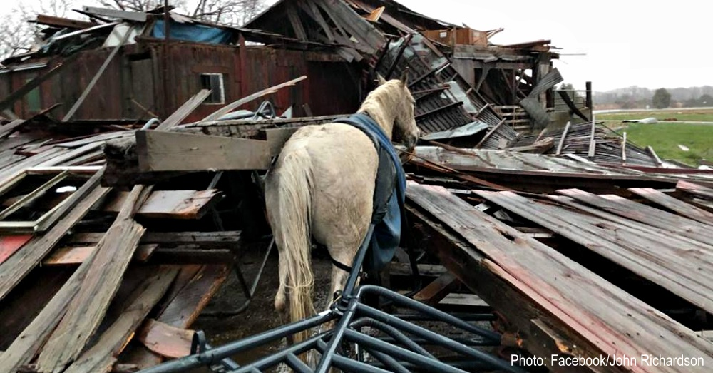 horse-survives-tornado-1