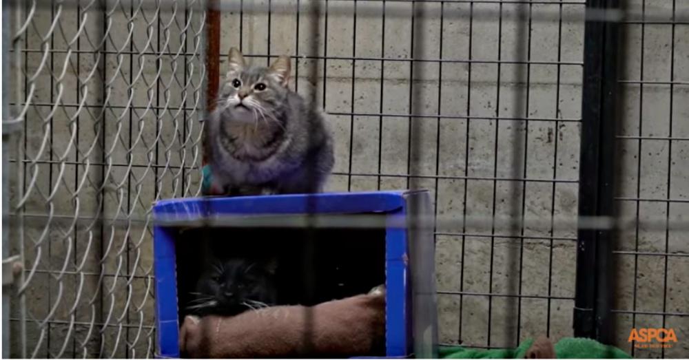 Screen Shot: YouTube/ASPCA