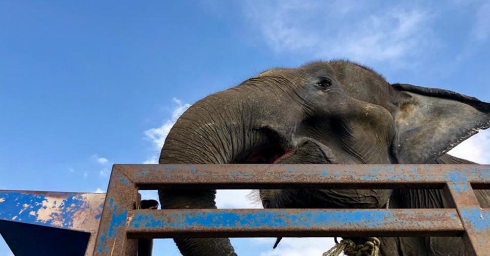 Source: Facebook/Phuket Elephant Sanctuary Phang Duan, now Sai Tong, on the road to Thailand.