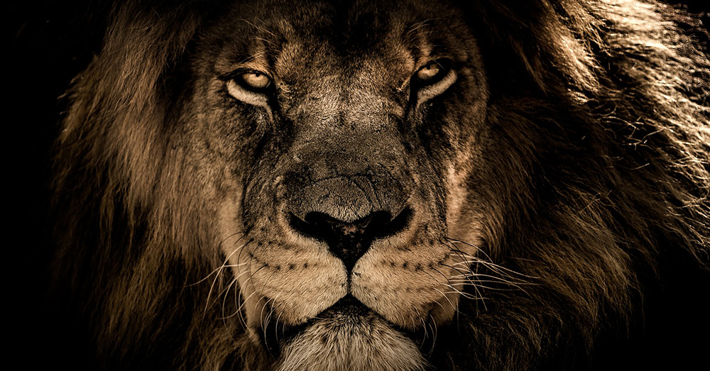 Source: Pixabay An African lion.
