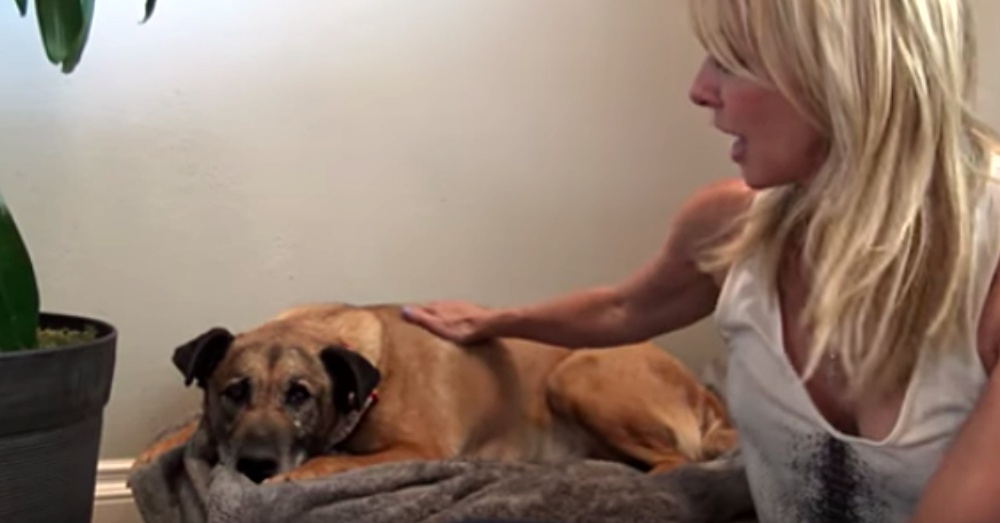 Screen Shot: YouTube/Hope For Paws