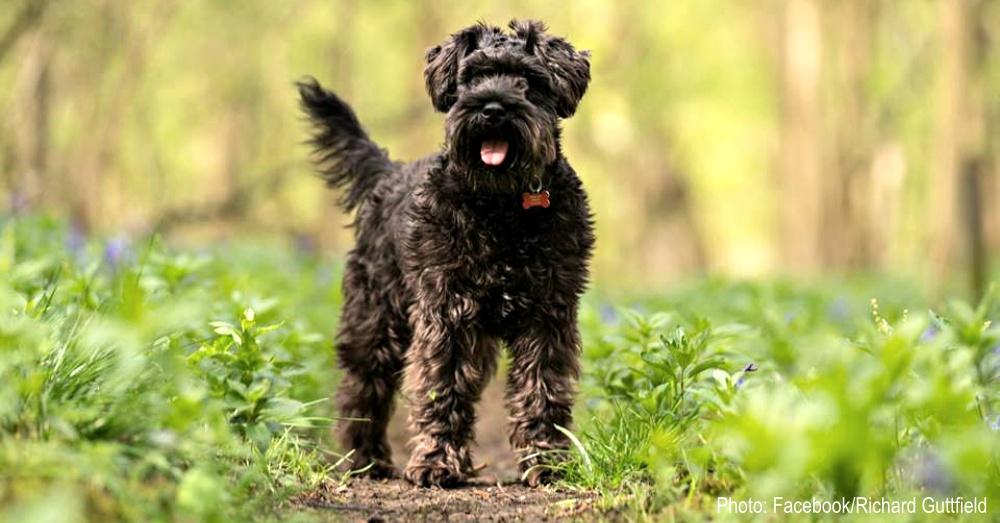 amazon-puppy-stealer-1