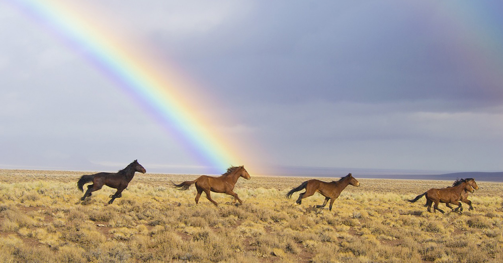 Source: Pixabay Wild horses run free in the American southwest.
