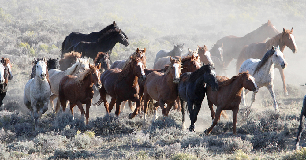 Source: Public Domain Pictures The BLM intends to reduce the number of wild horses and burros in the southwest by at least 75 percent.