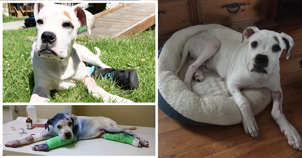 Source: Facebook/Sammies Journey To Recovery Sammie has made a full recovery!