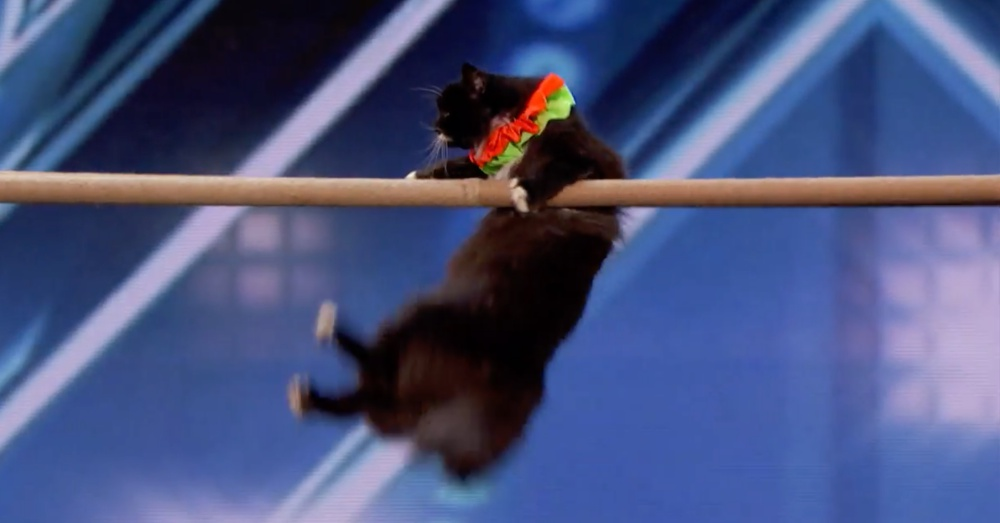 Screenshot: America's Got Talent