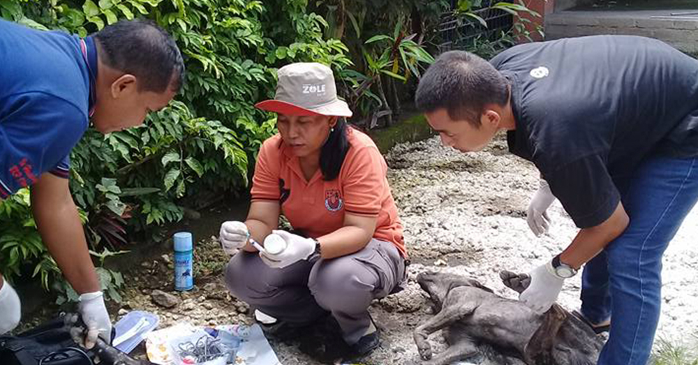 Source: Facebook/Desy Marlina Animal care professionals help Dezy sterilize the stray animals of Lombok.