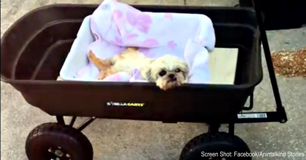 disabled-puppy-winnie-1