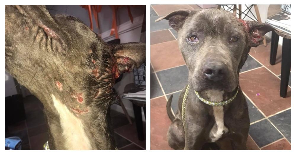 Photos: Facebook/SCAR Southern Cross Animal Rescue