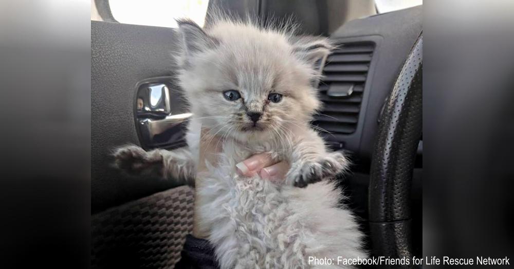 echo-cat-rescue-1