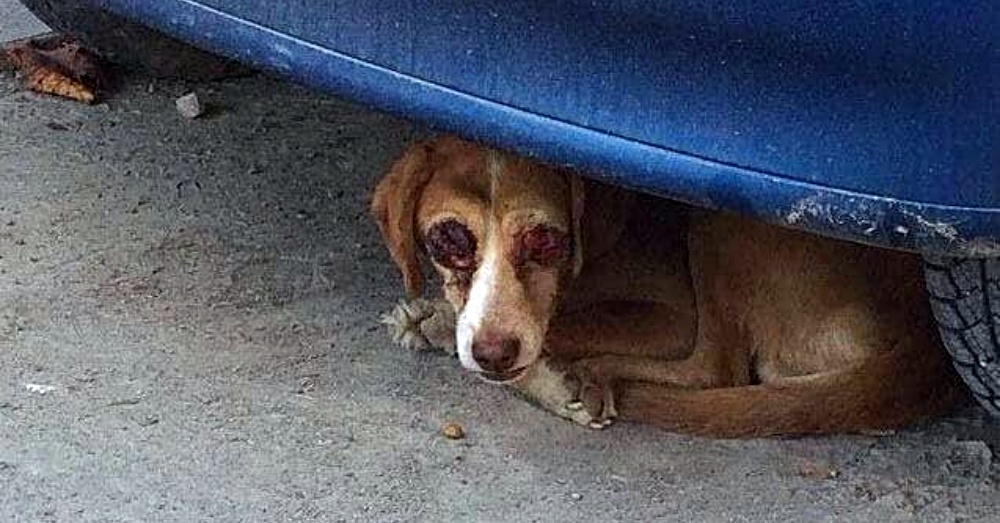 Photo: Facebook/Halfway Home Dog Rescue