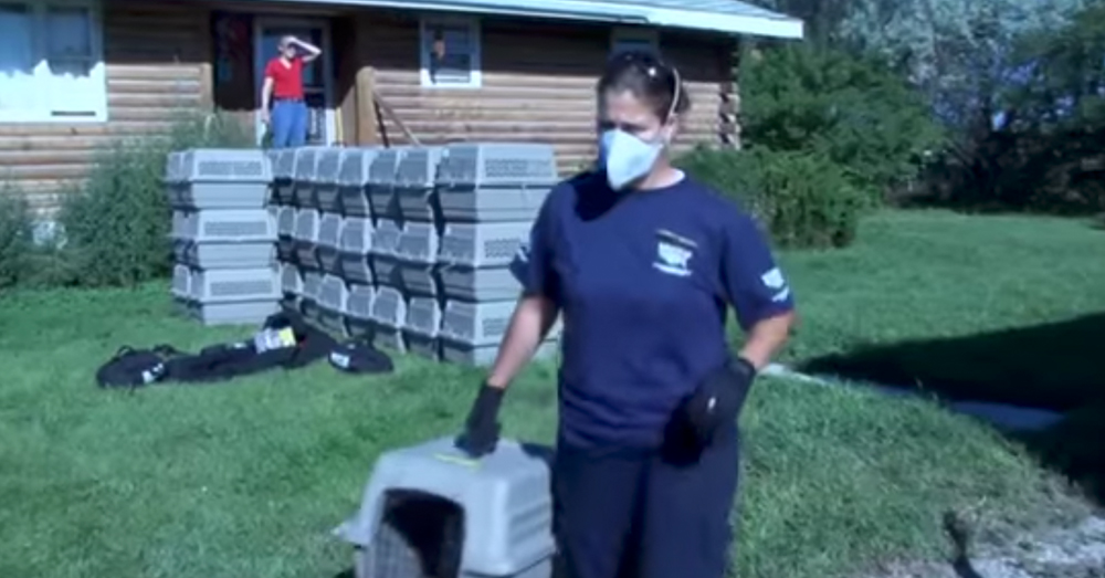 Source: YouTube/The Humane Society of the United States Like other similar cases, volunteers from the Humane Society were called to Farmington, Minn. to help.