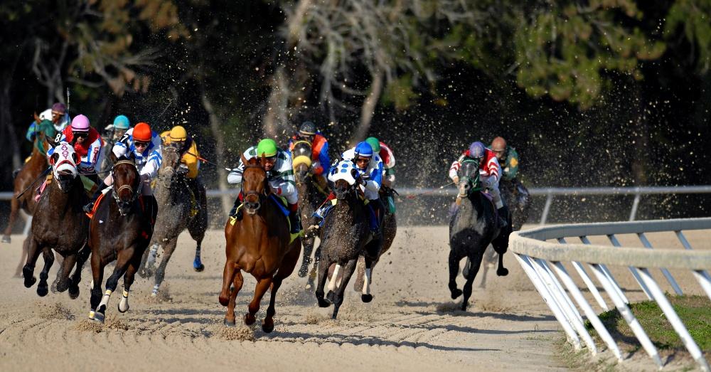 horse-racing-reality-3