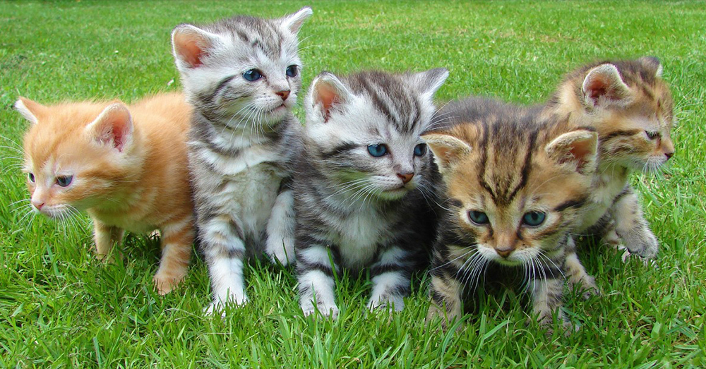 Source: Pixabay The kittens are often euthanized before they are 3 months old.