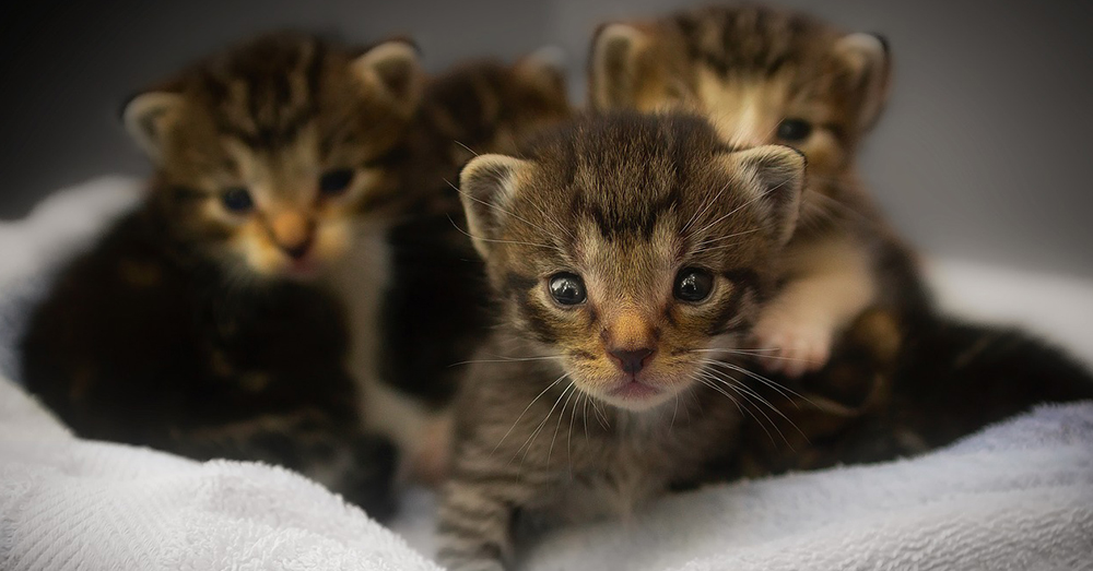 Source: Pixabay The USDA and EPA have been funding experiments on kittens since 1982.
