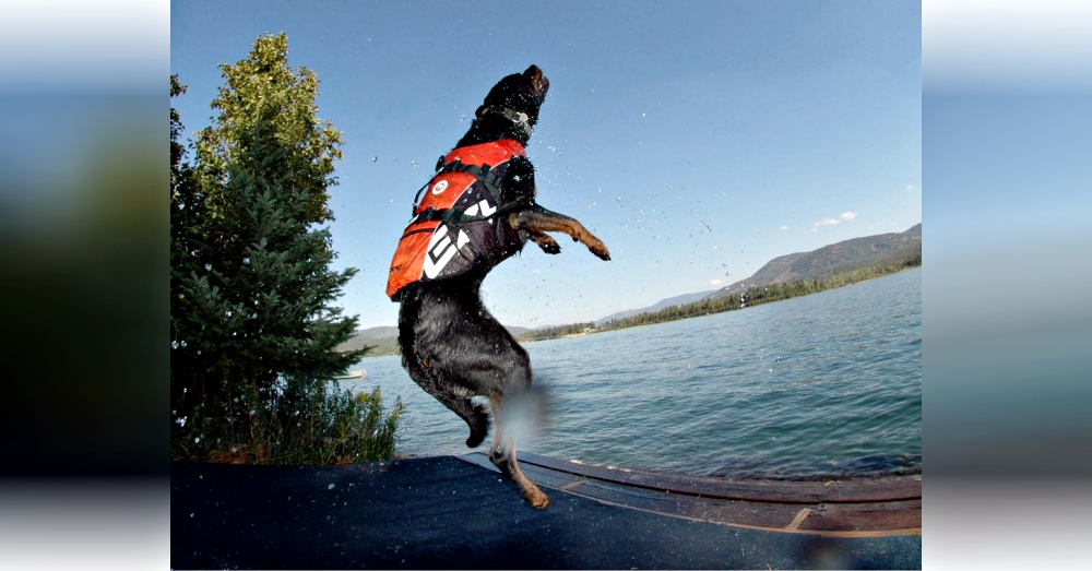 lake-dog-fun-6