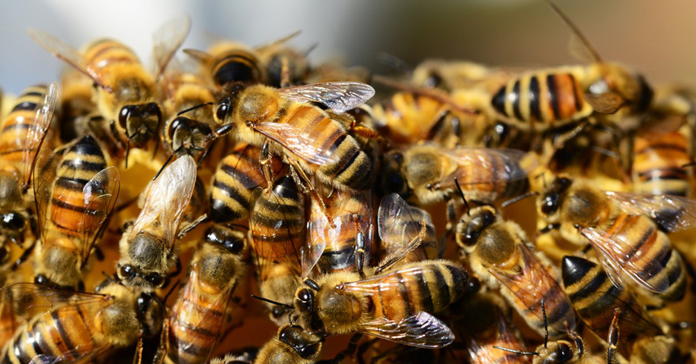 Source: PxHere Without pollinators, food shortages could lead to starvation in many countries.