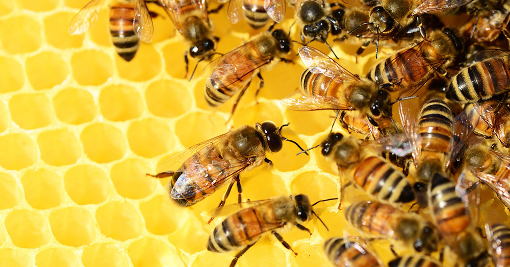 Source: Pixabay Most of the world's food is dependant on the work of pollinators like bees.